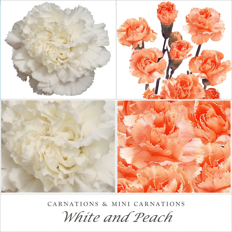 Carnations and Mini Carnation White - Peach- EbloomsDirect