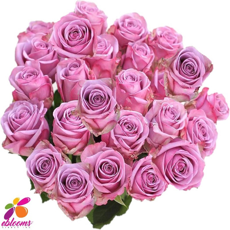 Rose Cool Water Lavender - EbloomsDirect