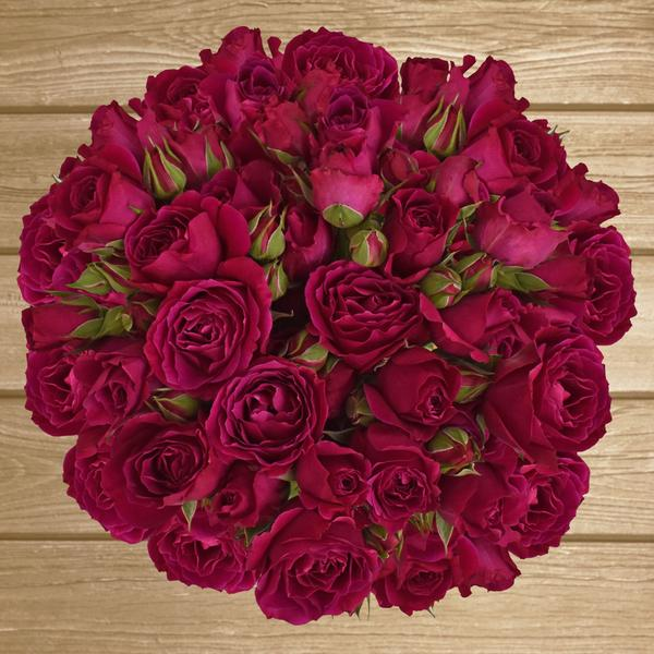 Spray Roses Burgundy 40cm - Pack 120 Stems - EbloomsDirect