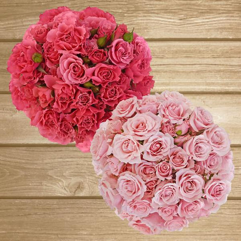 Spray Roses Duo Hot Pink-Light Pink 40cm - Pack 120 Stems - EbloomsDirect