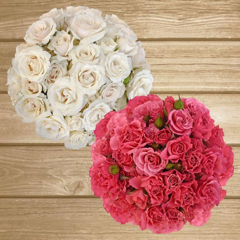 Spray Roses Duo White-Hot Pink 40cm - Pack 120 Stems - EbloomsDirect