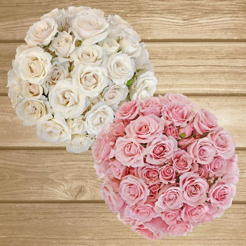 Spray Roses Duo White-Light Pink 40cm - Pack 120 Stems - EbloomsDirect