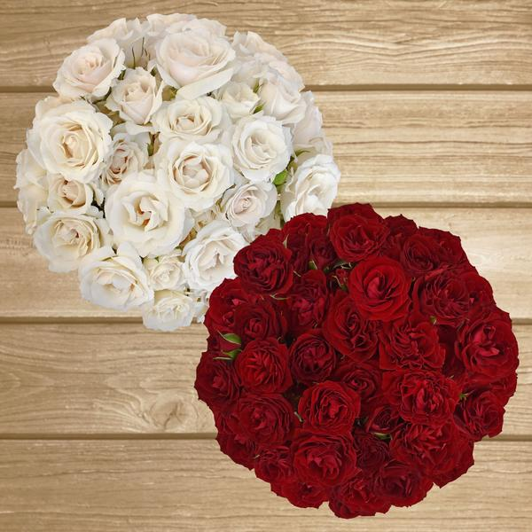 Spray Roses Duo White - Red 40cm - Pack 120 Stems - EbloomsDirect