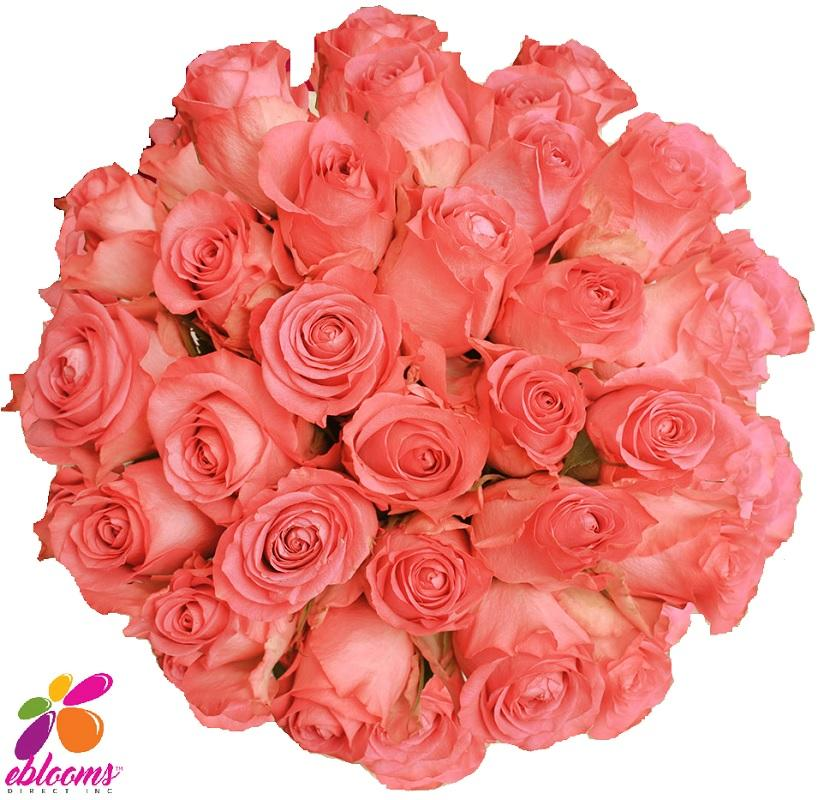 Engaement Rose Variety - EbloomsDirect