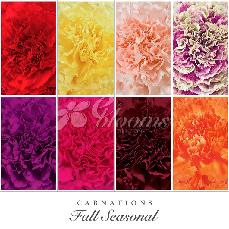 Carnation Fall Assorted Colors - EbloomsDirect