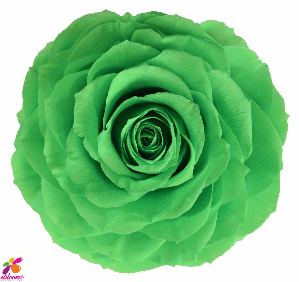Preserved Flower green roses - wholesale rose