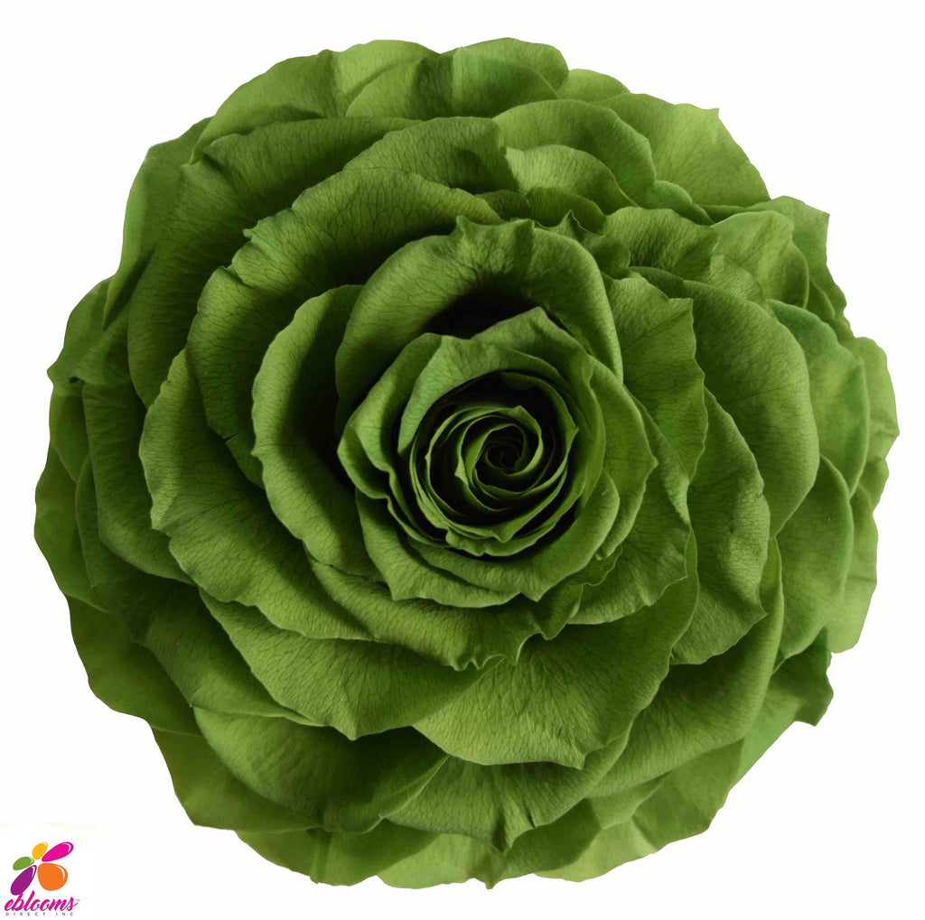 Preserved Roses Green Forest - EbloomsDirect