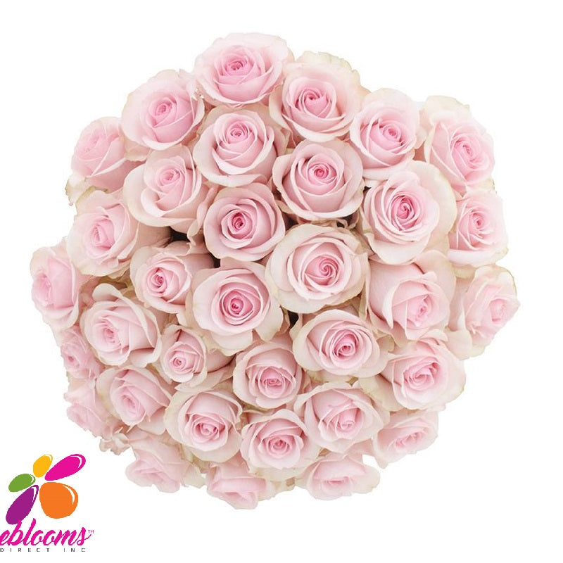 Girlfriend or Novia Rose Variety - EbloomsDirect