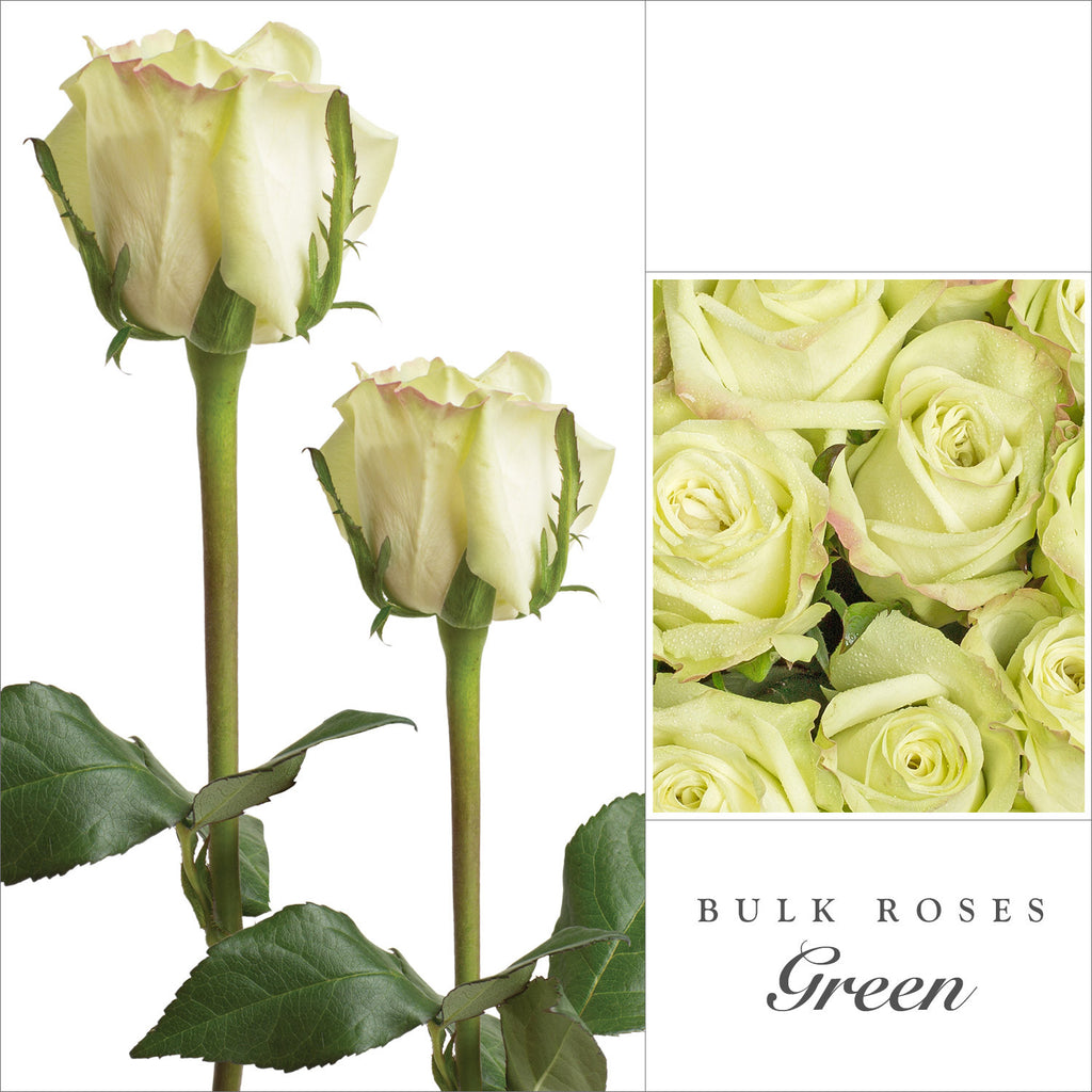 Rose Green Tea - EbloomsDirect