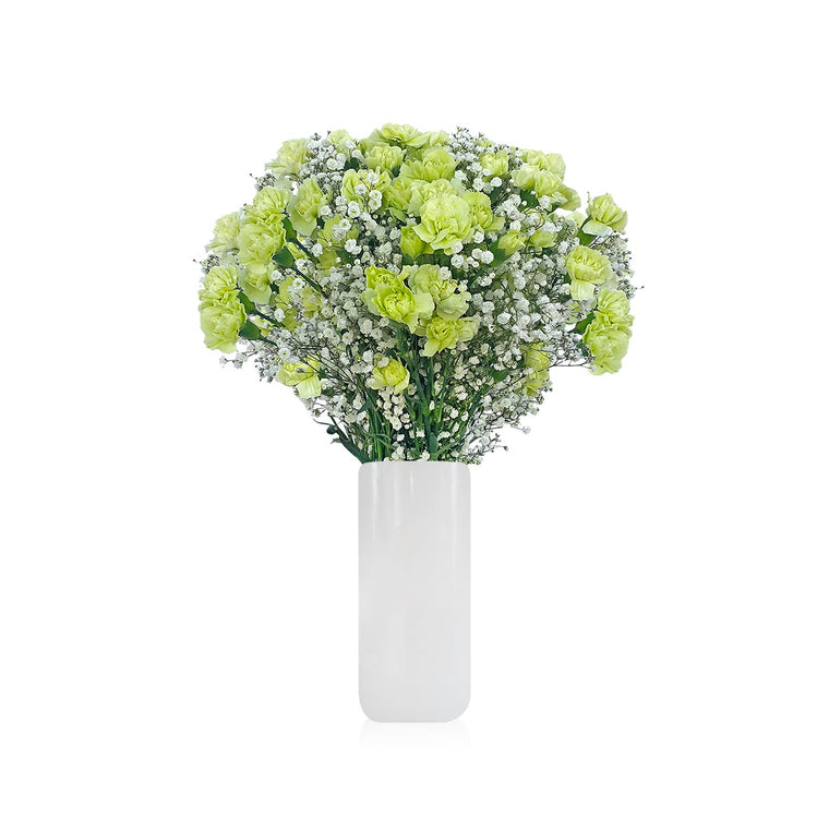 Mini Carnation & Baby breath Green Bouquet Pack 6  - EbloomsDirect