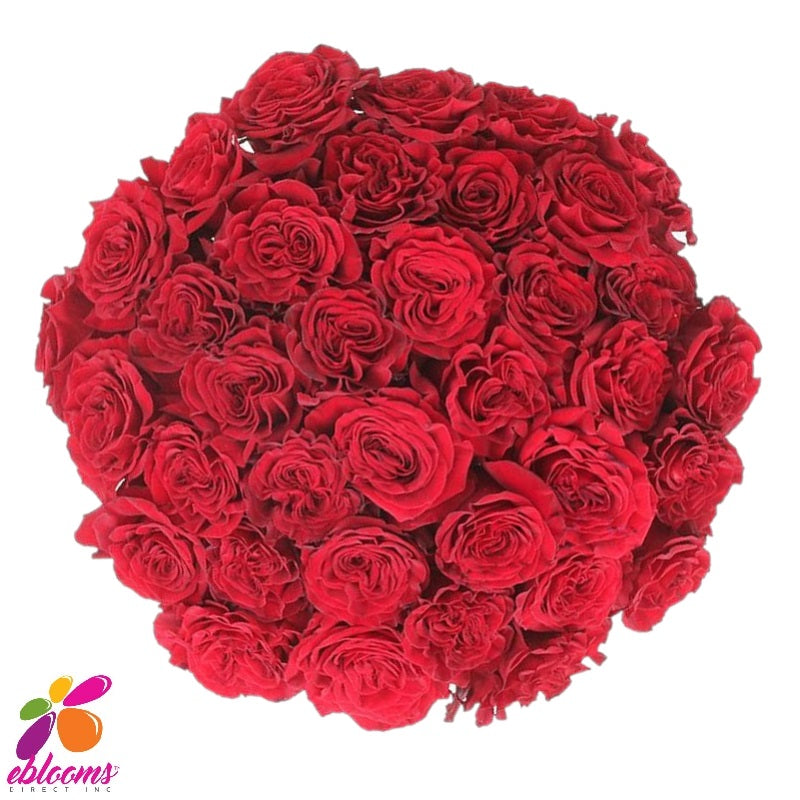 Hearts Rose Variety - EbloomsDirect