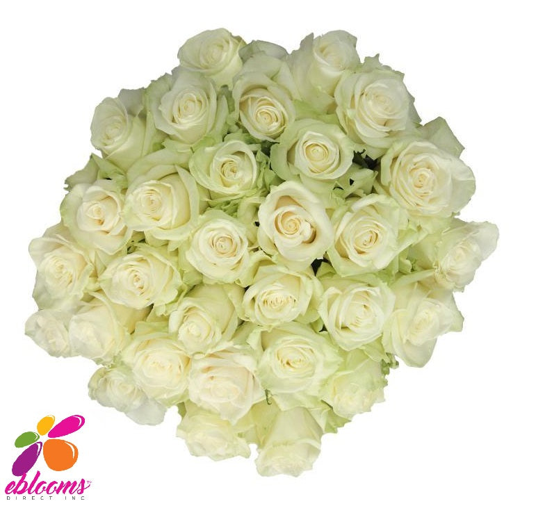 High & Peace Rose Variety White - EbloomsDirect