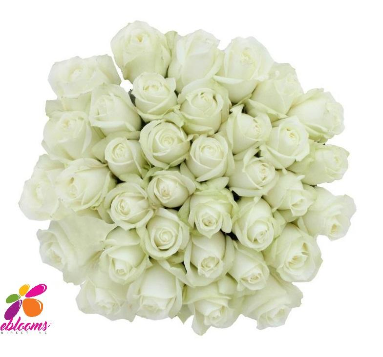 High & Pure Rose Variety - EbloomsDirect