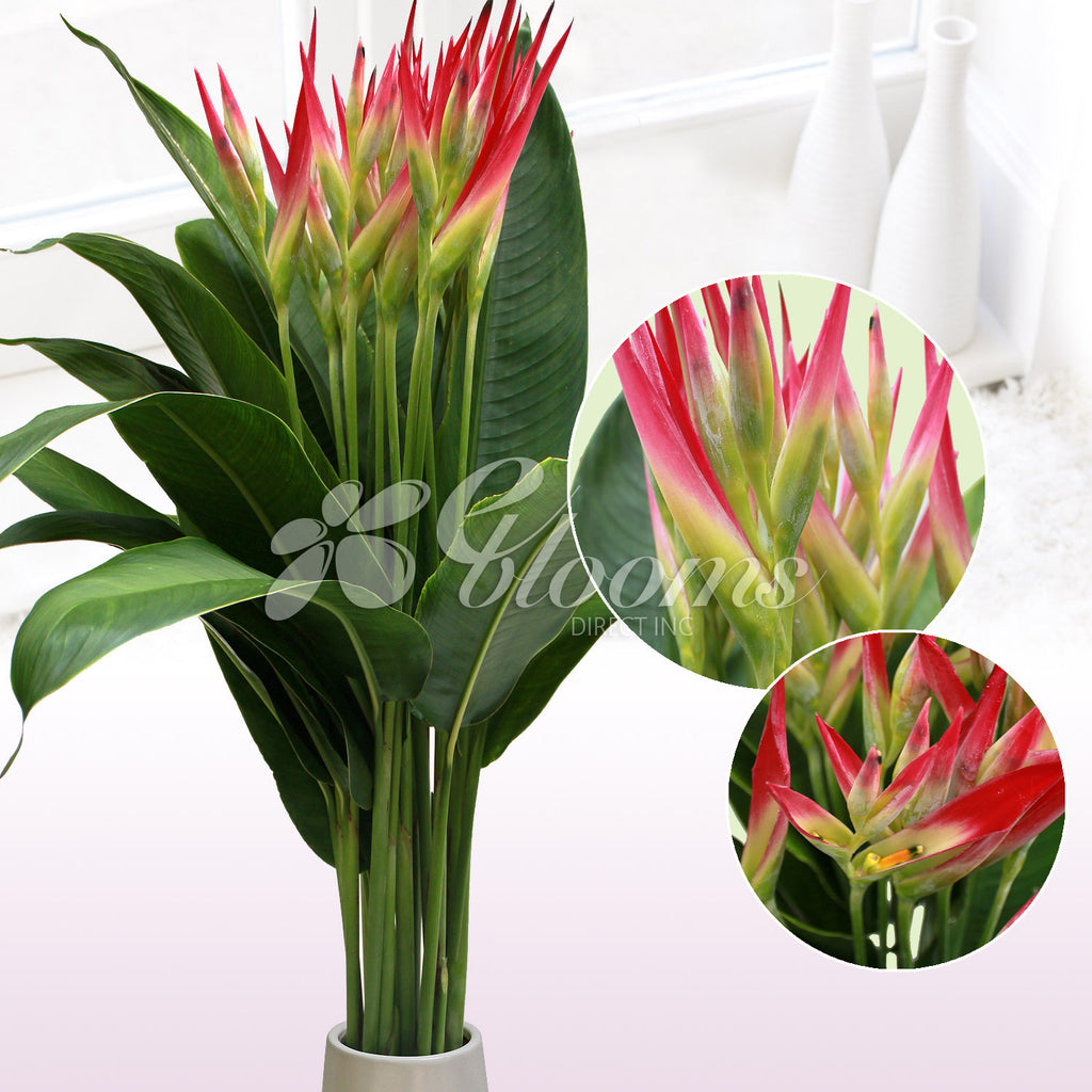 Sassy tropical Bouquet - EbloomsDirect
