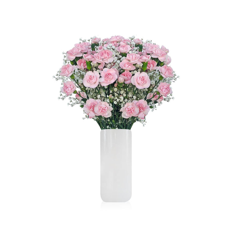 Mini Carnation & Baby breath Light Pink Bouquet Pack 6 - EbloomsDirect