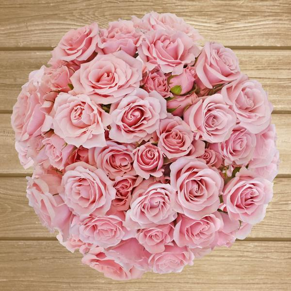 Spray Roses Light Pink 40cm - Pack 120 Stems - EbloomsDirect