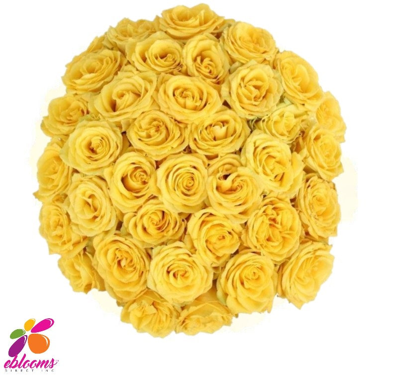 Lighthouse Rose bunch - EbloomsDirect