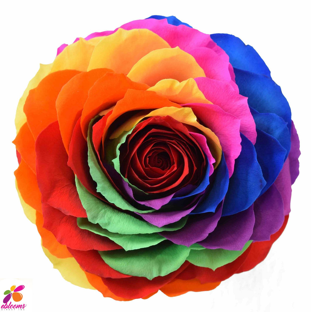 Preserved Roses Rainbow Bright - EbloomsDirect