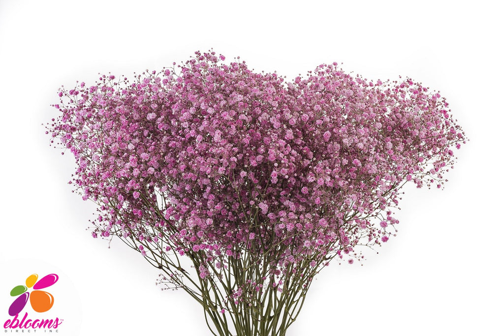 Medium Pink baby's breath