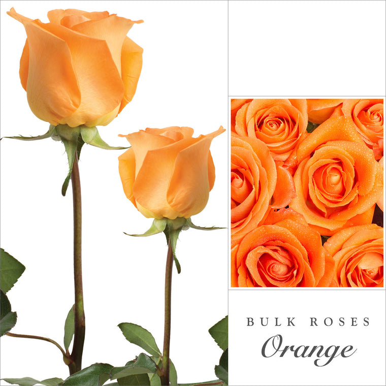 Rose Orange by Variety - EbloomsDirect