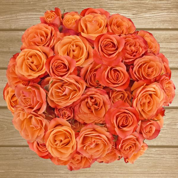 Spray Roses Orange 40cm - Pack 120 Stems - EbloomsDirect