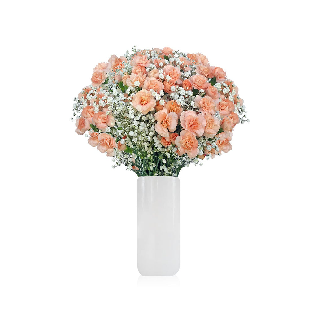 Carnation and Gypsophila cream www.ebloomsdirect.com
