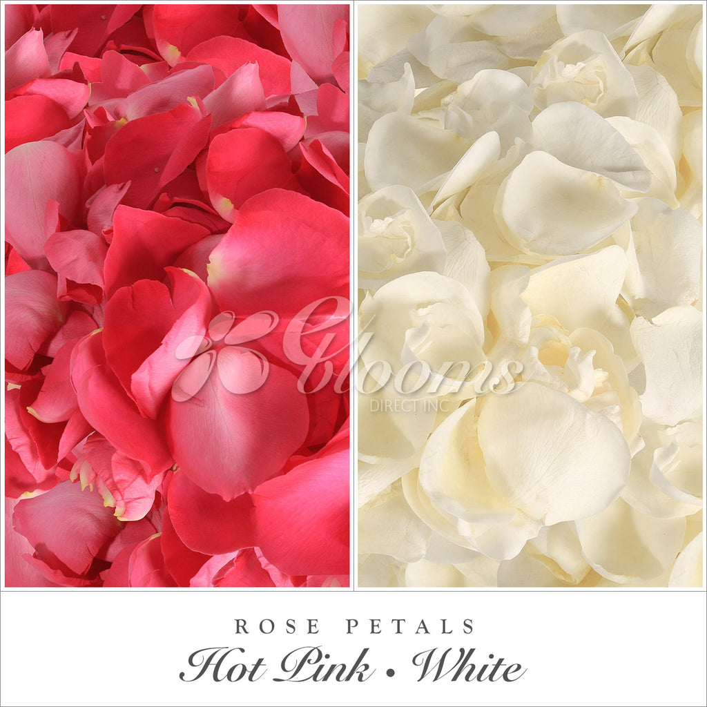 Hot pink and White rose petals for valentine's day and wedding season