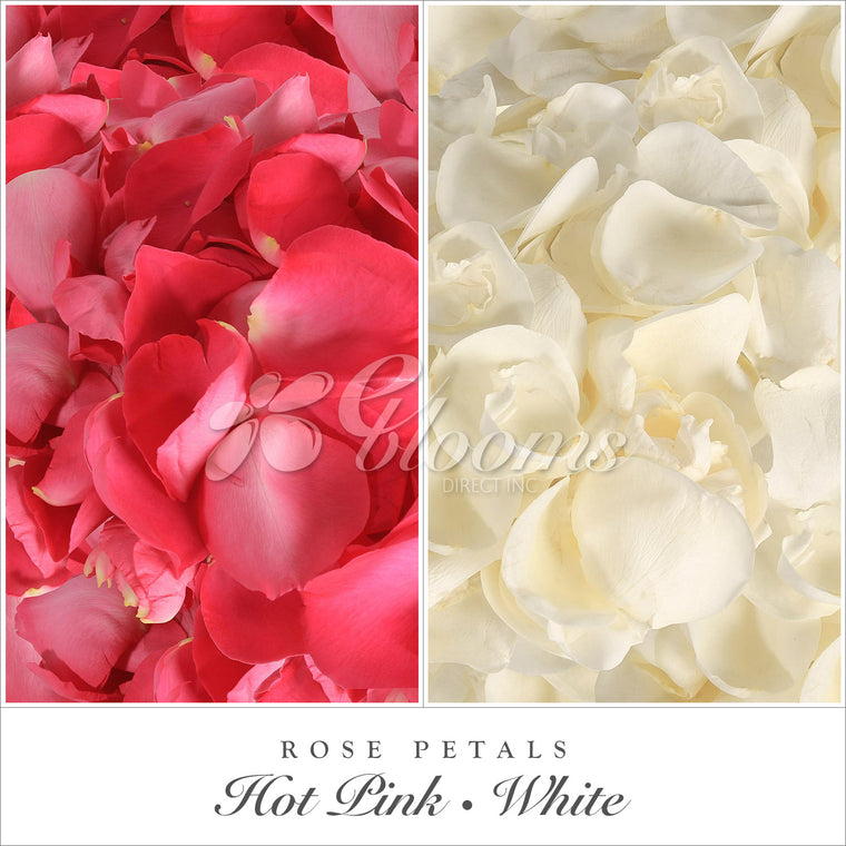 Rose Petals Hot Pink and White - EbloomsDirect