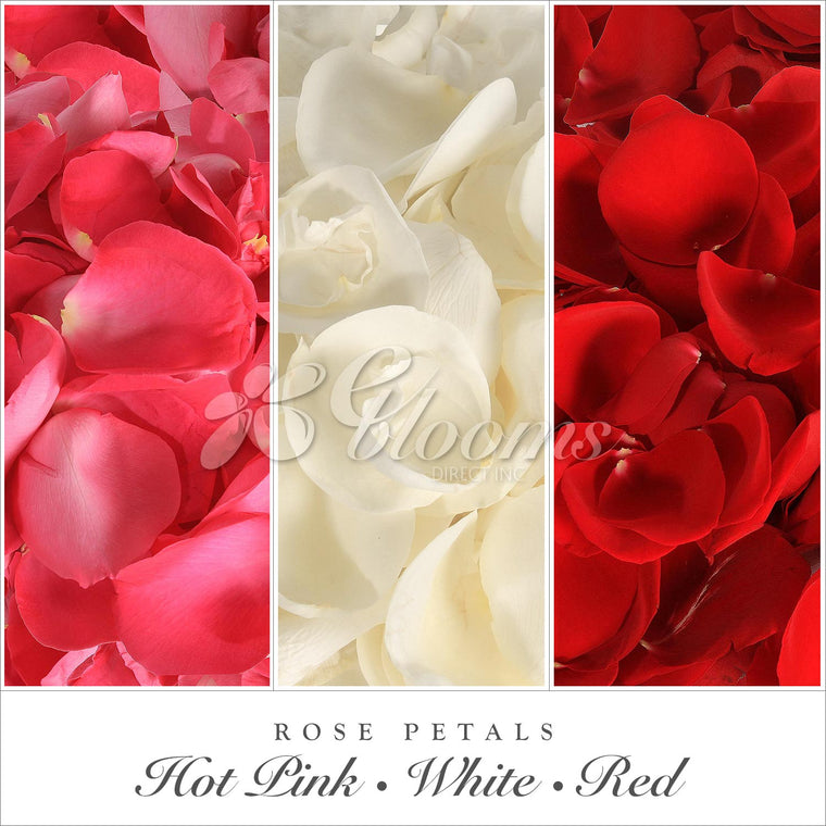 Rose Petals Hot Pink, Red and White - EbloomsDirect