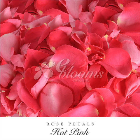 Hot pink Rose Petals for valentine's day and wedding season
