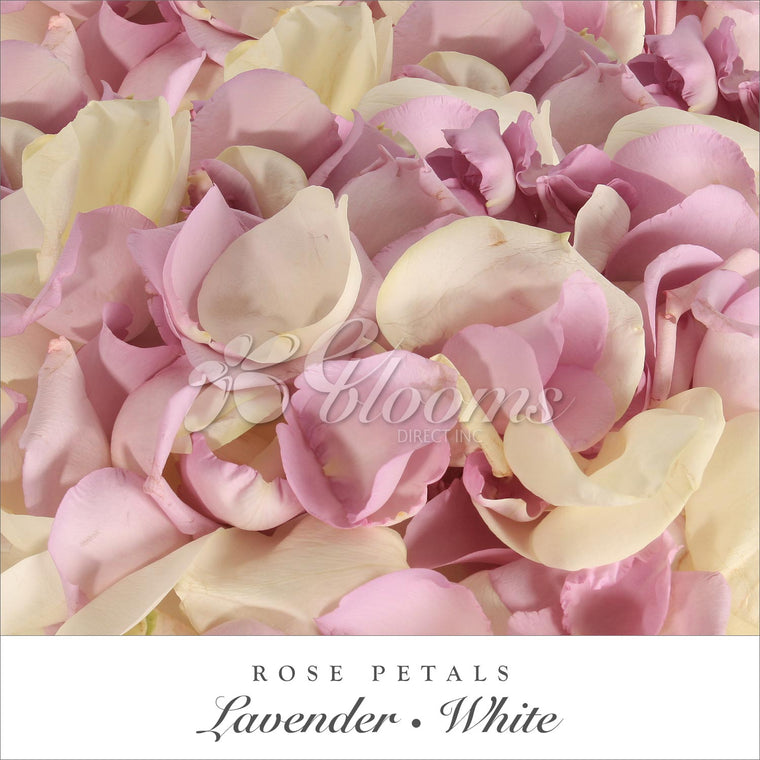 Rose Petals White and Lavender - EbloomsDirect