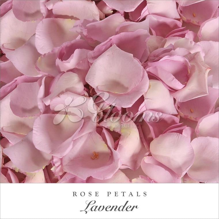 Rose Petals Lavender - EbloomsDirect