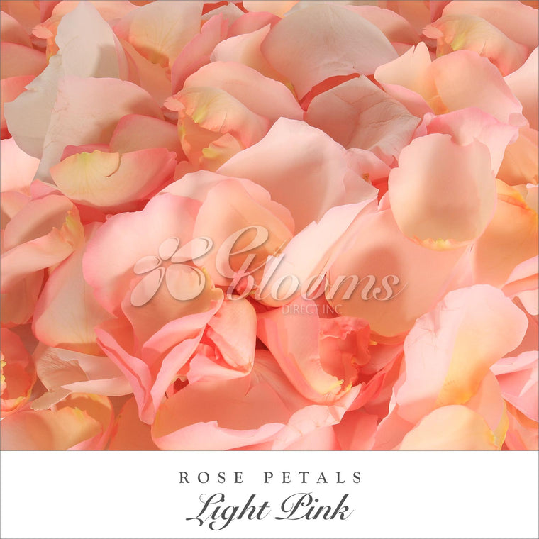 Rose Petals Light Pink - EbloomsDirect