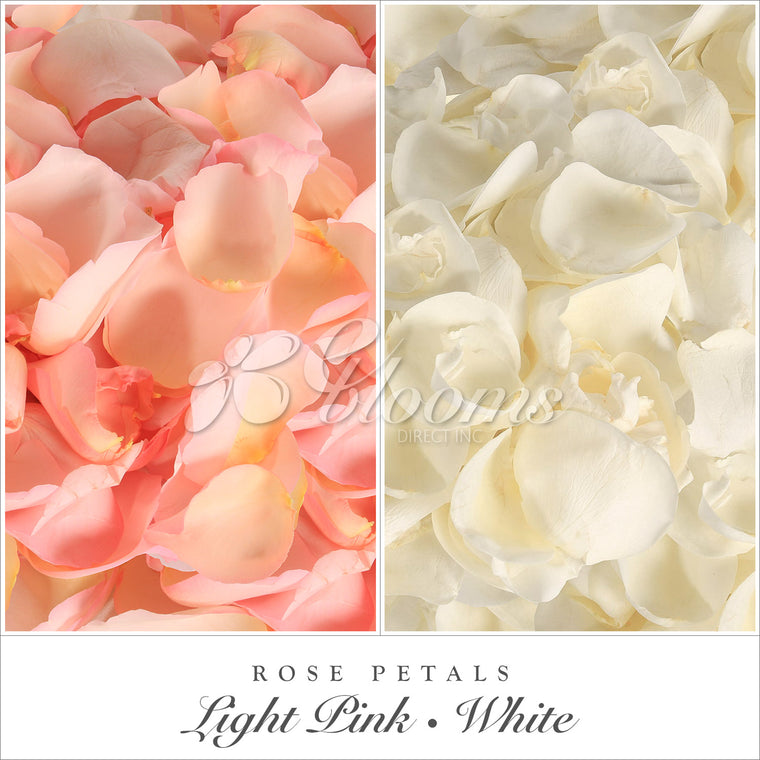 Rose Petals Light Pink and White