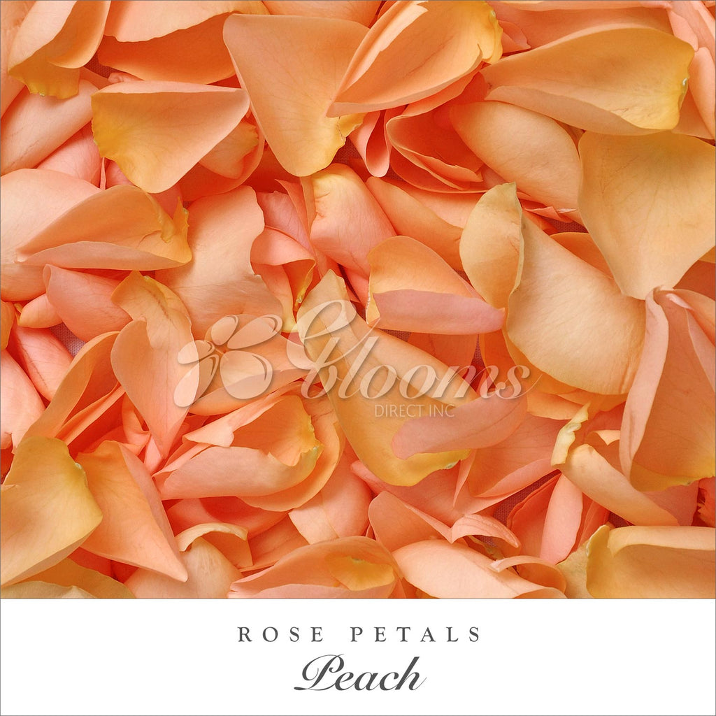 peach Rose Petals for valentine's day and wedding season