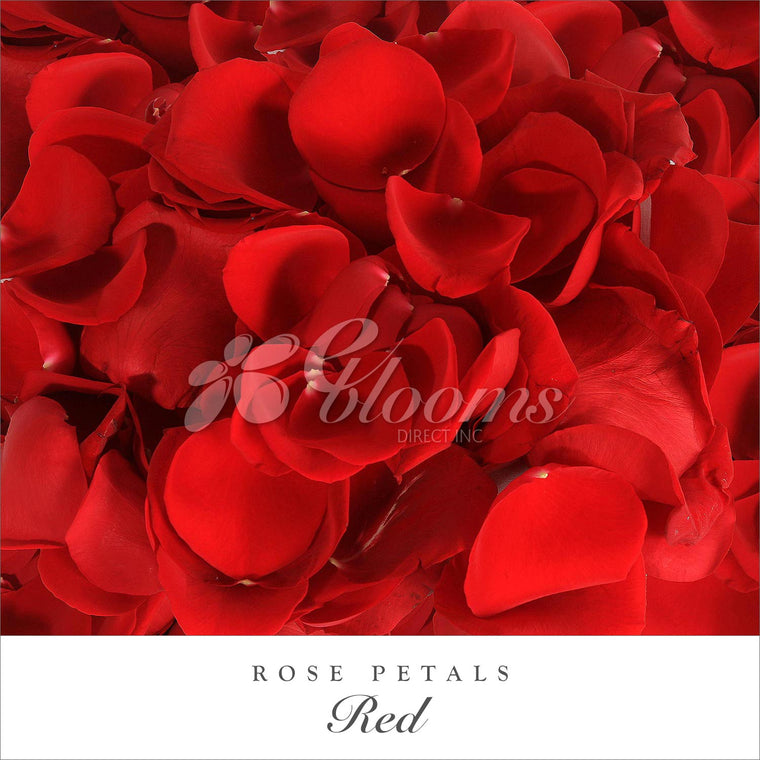 Rose Petals Red - EbloomsDirect