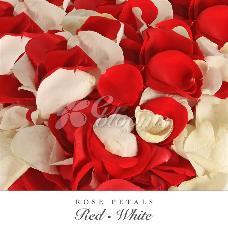Rose Petals Red and White - EbloomsDirect