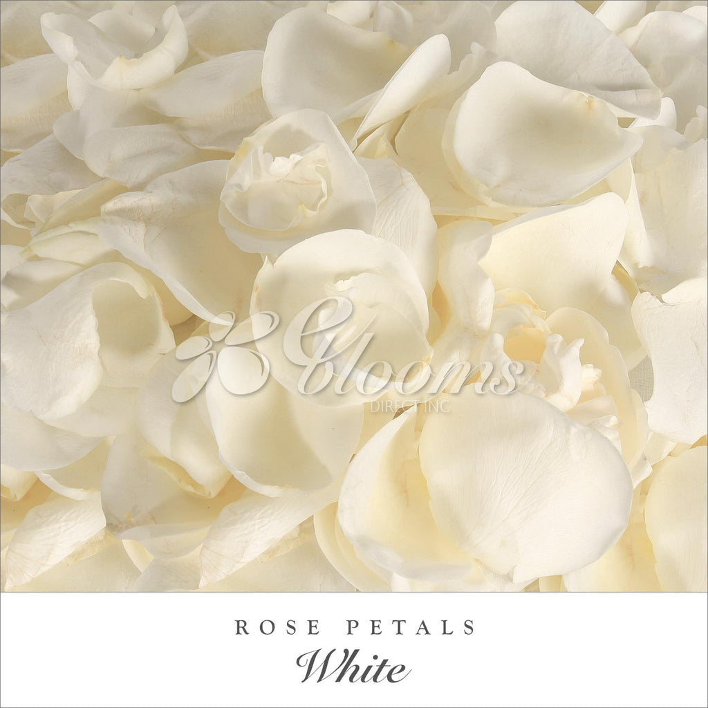 Rose Petals White for velentine's day and wedding season