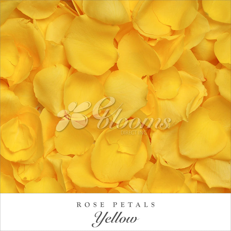 Rose Petals Yellow