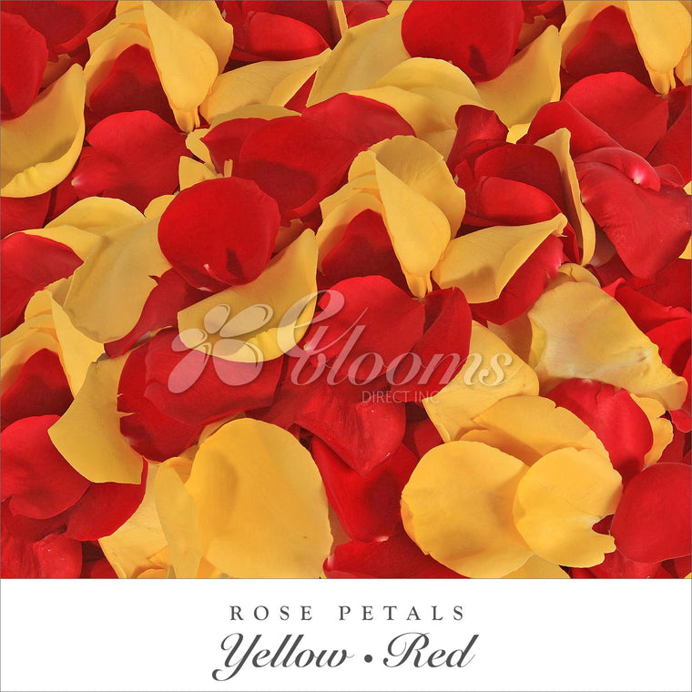 Rose Petals Yellow and Red - EbloomsDirect
