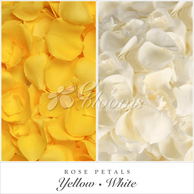 Rose Petals Yellow and White - EbloomsDirect