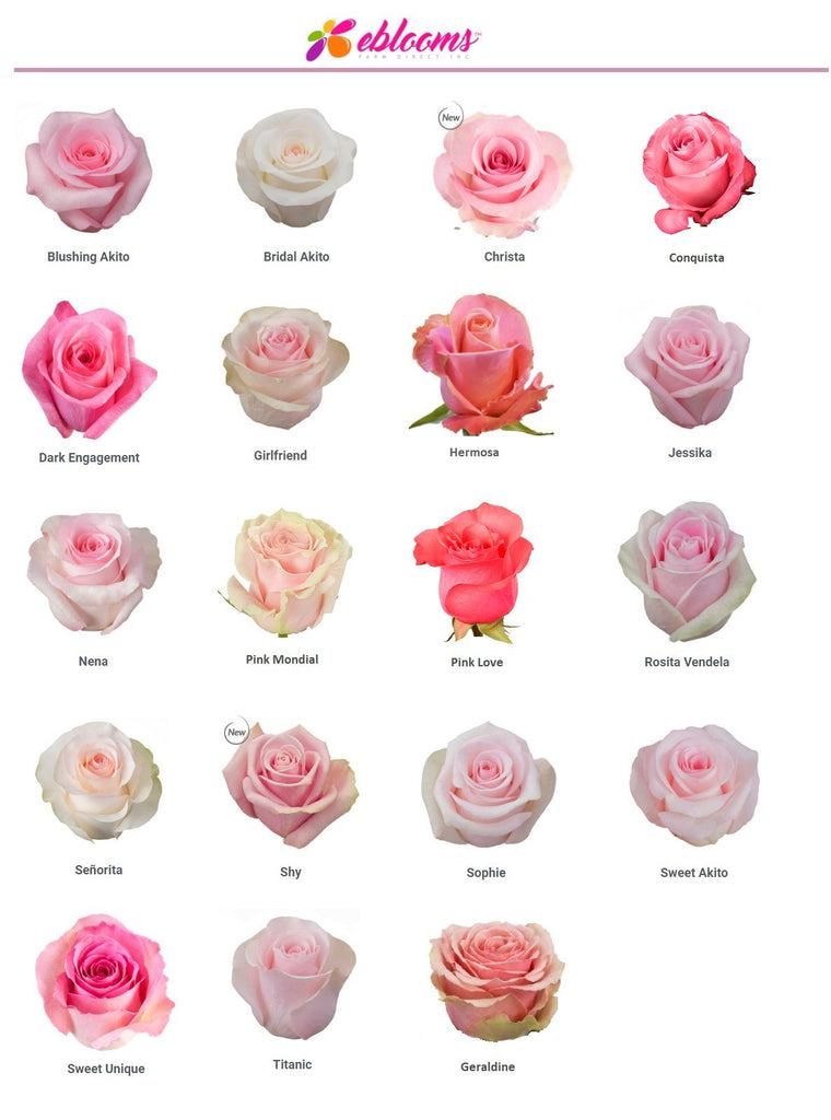 Pink Rose Varieties best sellers - EbloomsDirect