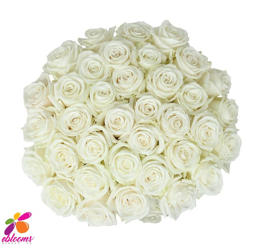 Proud Rose variety - White - Eblooms