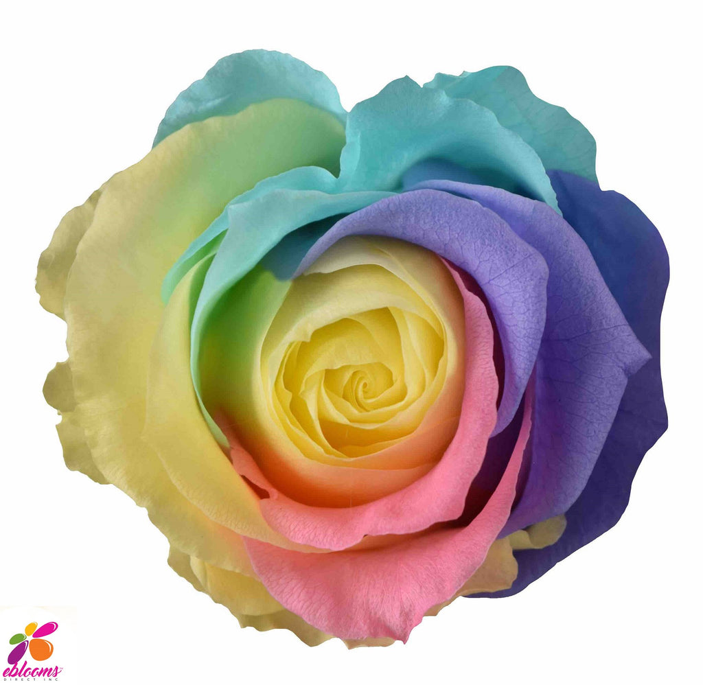 Preserved Flower Rainbow roses - wholesale rose - LGTBIQ