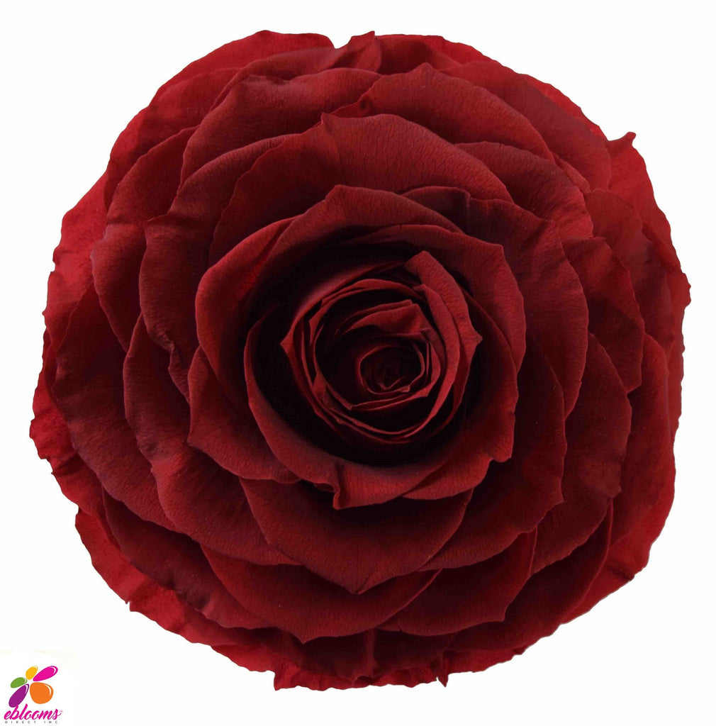 Preserved Roses Red Burgundy - EbloomsDirect