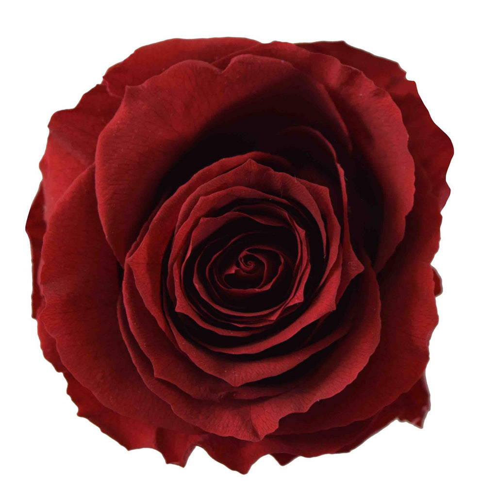 Preserved Flower Red Burgundy roses - wholesale rose