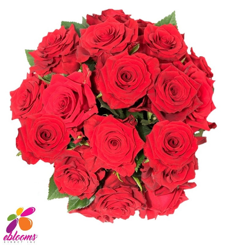 Royal Explorer Red Rose Variety