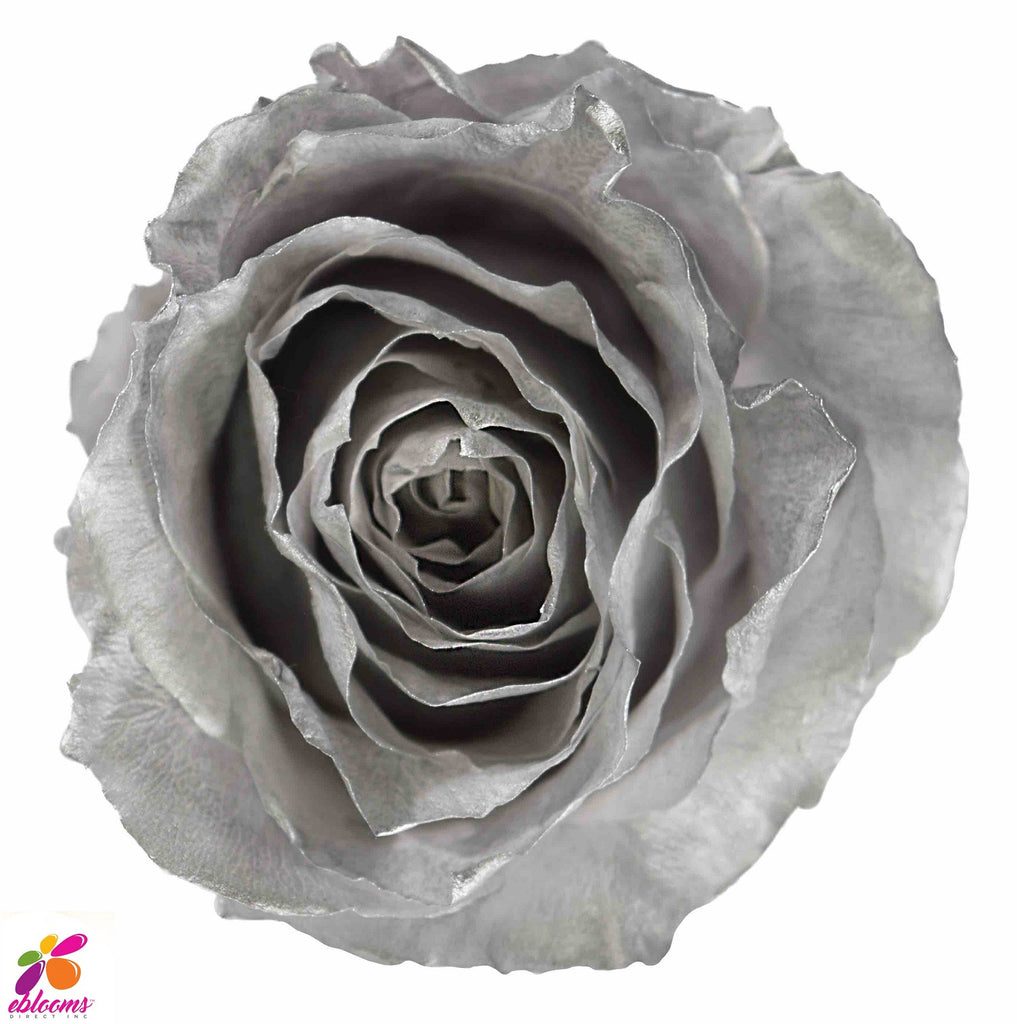 Preserved Flower SILVER roses - wholesale rose