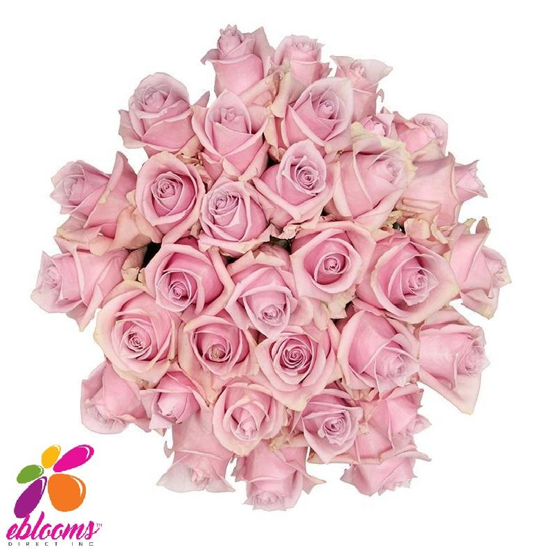 Shy Rose Variety - EbloomsDirect
