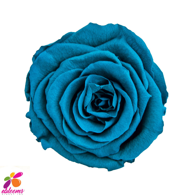 Preserved Roses Cyan Blue - EbloomsDirect